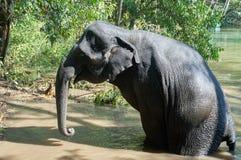 Elefante no rio que prepara-se para encontrar-se para baixo Imagens de Stock