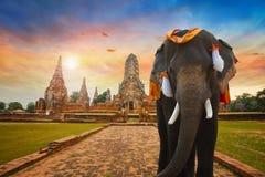 Elefante no templo de Wat Chaiwatthanaram em Ayuthaya, Tailândia Foto de Stock