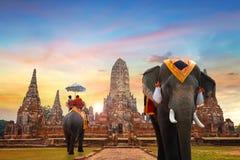Elefante no templo de Wat Chaiwatthanaram em Ayuthaya, Tailândia Imagem de Stock Royalty Free