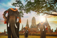 Elefante no templo de Wat Chaiwatthanaram em Ayuthaya, Tailândia Imagens de Stock