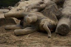 Elefante novo fotos de stock