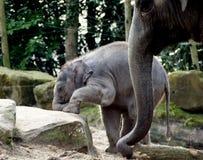 Elefante novo Fotos de Stock Royalty Free