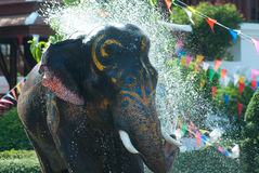 Elefante novo que espirra a água Fotografia de Stock Royalty Free