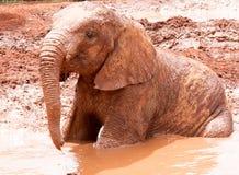 Elefante novo que joga na água enlameada Imagem de Stock