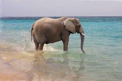 Elefante in oceano Fotografia Stock Libera da Diritti