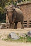Elefante - Osaka - Giappone Fotografia Stock