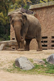 Elefante - Osaka - Japón Fotografía de archivo