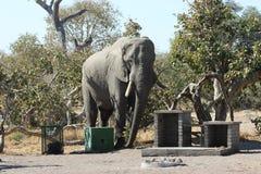 Elefante in parco nazionale Fotografie Stock