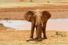 Elefante in parco nazionale del Kenya Fotografia Stock Libera da Diritti