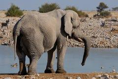 Elefante, parque nacional de Etosha, Namibia Fotografía de archivo