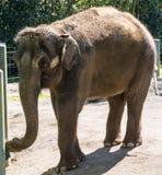 Elefante pasado Foto de archivo