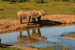 Elefante pela água Fotografia de Stock Royalty Free