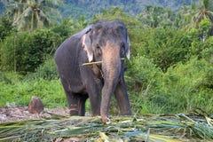Elefante piacevole Fotografia Stock Libera da Diritti