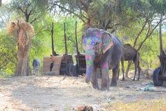 Elefante pintado Imagen de archivo