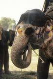 Elefante pintado fuera del templo Foto de archivo
