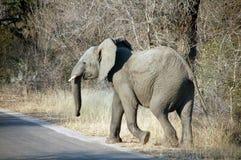 Elefante por el camino foto de archivo