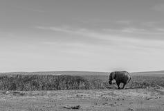 Elefante por un waterhole Fotografía de archivo libre de regalías