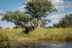 Elefante que anda da água imagens de stock