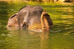 Elefante que banha-se no rio, Ásia, Sumatra Imagem de Stock Royalty Free