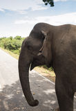 Elefante que camina en el camino en la puesta del sol Imagen de archivo