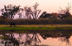 Elefante que camina en riverbank durante puesta del sol imagen de archivo libre de regalías