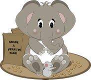 Elefante que come amendoins Imagem de Stock