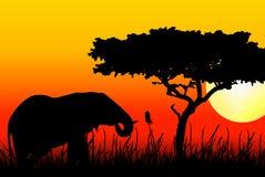 Elefante que come en puesta del sol ilustración del vector
