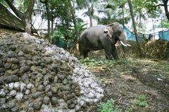 Elefante que come las plantas fotos de archivo libres de regalías