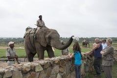 Elefante que consigue el sombrero de la cabeza de las muchachas Imagenes de archivo
