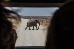 Elefante que cruza el camino en el parque nacional Namibia de Etoshna Imagenes de archivo