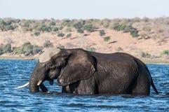 Elefante que cruza o rio Foto de Stock