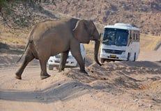Elefante que cruza uma estrada Fotografia de Stock Royalty Free