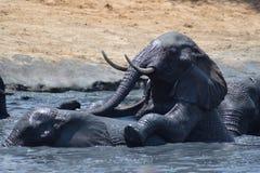 Elefante que empuja el agujero de agua Imagenes de archivo