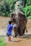 Elefante que está sendo banhado por seu alimentador Fotografia de Stock Royalty Free