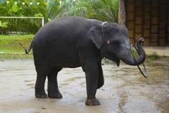 Elefante que gira el aro en el estadio Foto de archivo