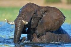 Elefante que juega en el río Foto de archivo libre de regalías