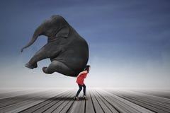 Elefante que lleva de la mujer hermosa Imágenes de archivo libres de regalías