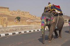 Elefante que passa o forte ambarino Fotos de Stock Royalty Free
