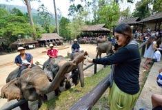 Elefante que pide extremidades Imagenes de archivo