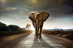 Elefante que recorre Imagen de archivo libre de regalías