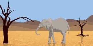 Elefante que recorre en desierto stock de ilustración