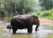 Elefante que salpica con agua Fotos de archivo