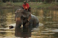 Elefante que se baña en el río con su controlador en la salida del sol Foto de archivo