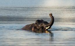 Elefante que se baña en el salvaje fotos de archivo