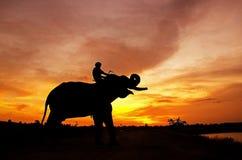 Elefante que se coloca con el mahout Fotografía de archivo