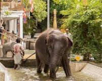 Elefante que se lava del hombre Fotografía de archivo libre de regalías