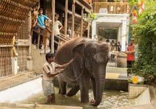 Elefante que se lava del hombre en piscina Fotografía de archivo