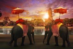 Elefante que se viste con standi tailandés de los accesorios de la tradición del reino Foto de archivo