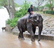 Elefante que trabaja en Tailandia en la lluvia Fotos de archivo libres de regalías