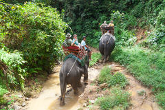 Elefante que trekking no parque nacional de Khao Sok Fotos de Stock Royalty Free